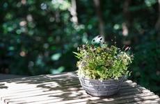 お花のプレゼント|里山を連想させるようなナチュラルな雰囲気が魅力|フラワーギフト