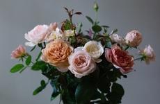 お花のプレゼント|摘みたての「和ばら」を直送でお届けできるのは「Rose Farm KEIJI」|フラワーギフト